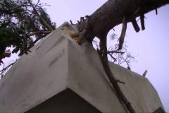 Albero caduto sulla scala