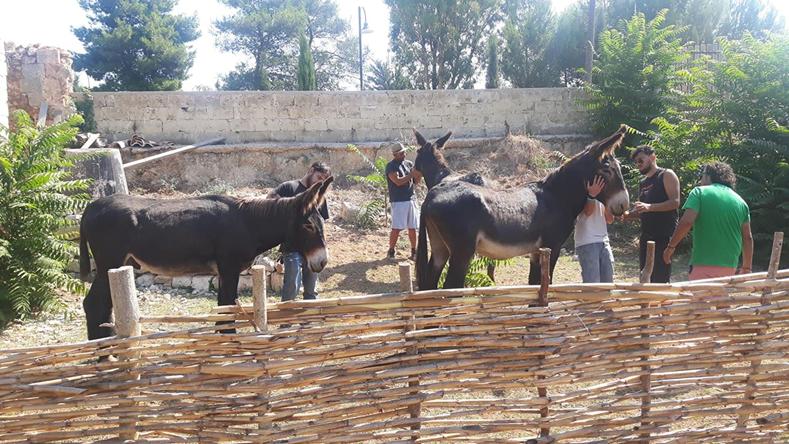 Gli asini di Martina Franca affidati alla cooperativa Casa delle AgricUlture